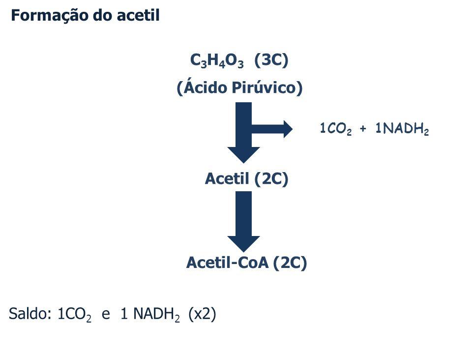 Formação do acetil Saldo: 1CO2 e 1 NADH2 (x2) C3H4O3 (3C)