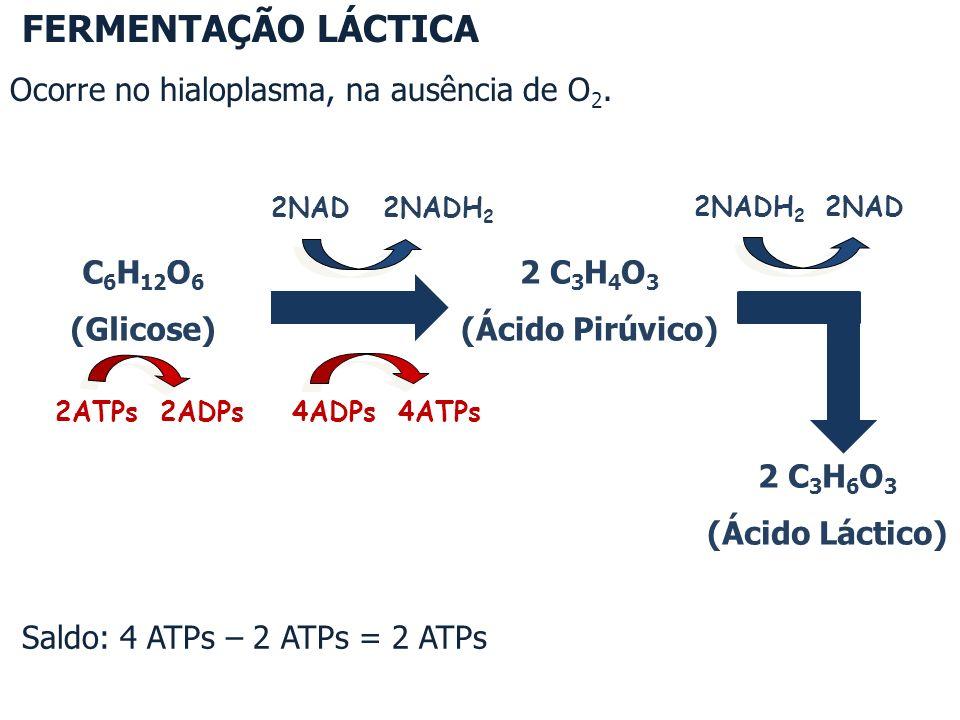 Saldo: 4 ATPs – 2 ATPs = 2 ATPs