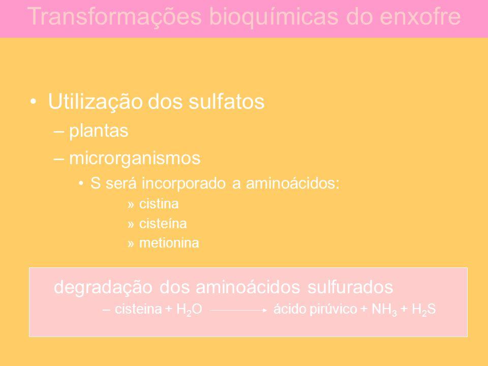 Transformações bioquímicas do enxofre