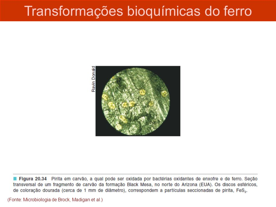 Transformações bioquímicas do ferro