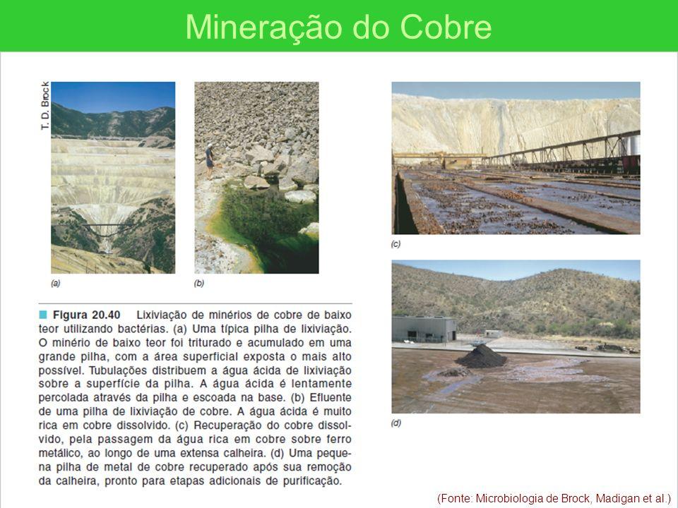Mineração do Cobre (Fonte: Microbiologia de Brock, Madigan et al.)
