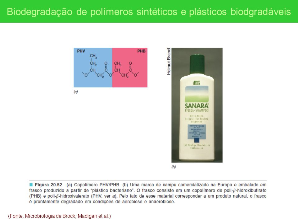 Biodegradação de polímeros sintéticos e plásticos biodgradáveis
