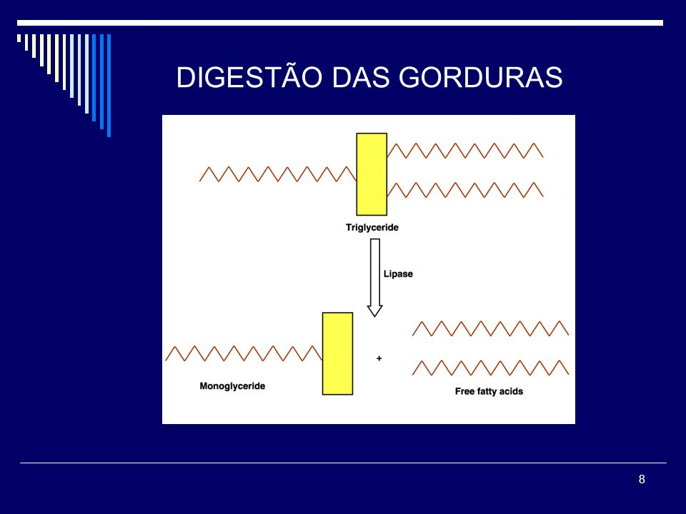 DIGESTÃO DAS GORDURAS