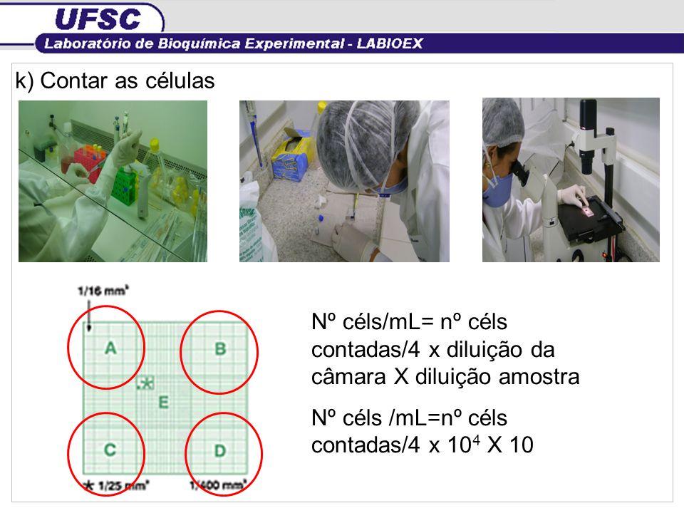 k) Contar as célulasNº céls/mL= nº céls contadas/4 x diluição da câmara X diluição amostra.