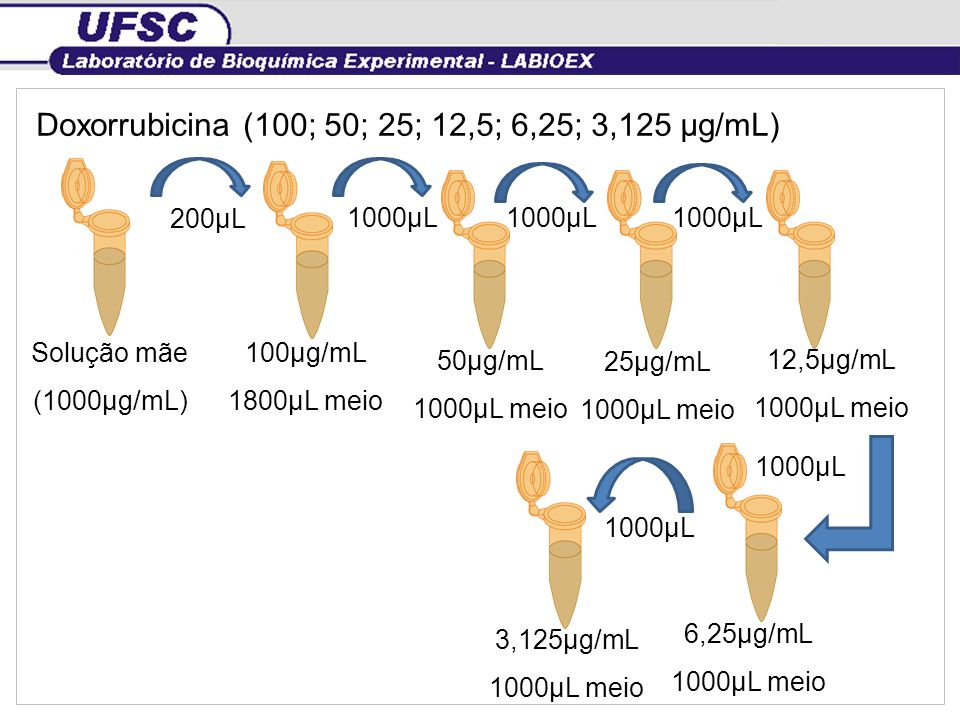Doxorrubicina (100; 50; 25; 12,5; 6,25; 3,125 µg/mL)
