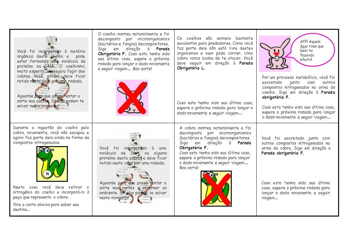 Por um processo metabólico, você foi excretado junto com outros compostos nitrogenados na urina do coelho. Siga em direção à Parada obrigatória F.