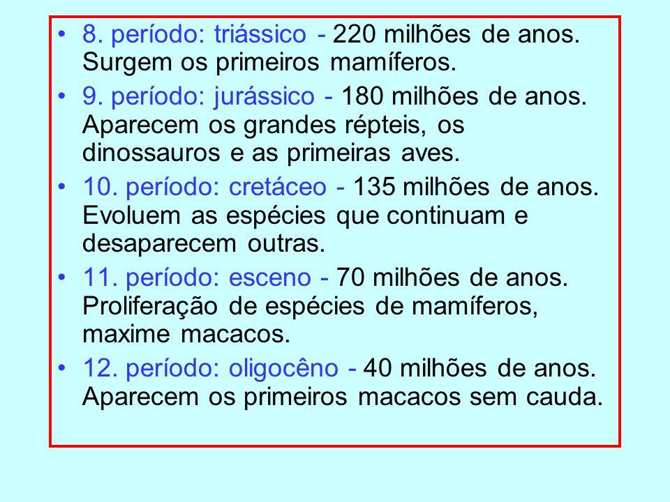8. período: triássico - 220 milhões de anos