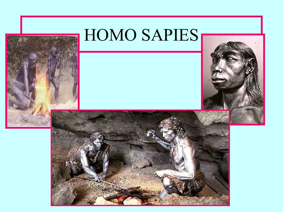 HOMO SAPIES