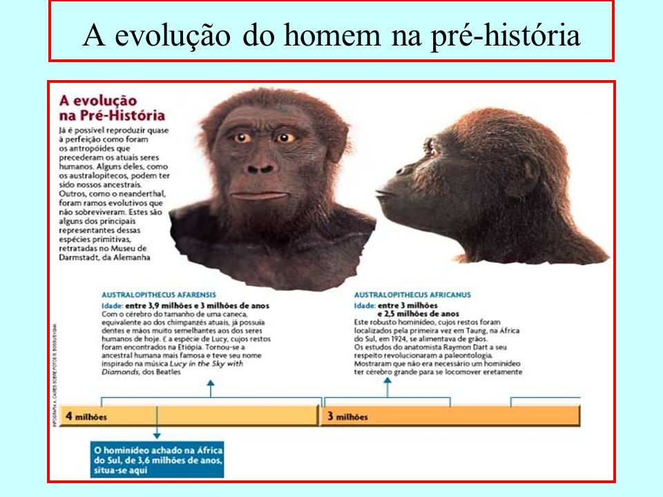 A evolução do homem na pré-história