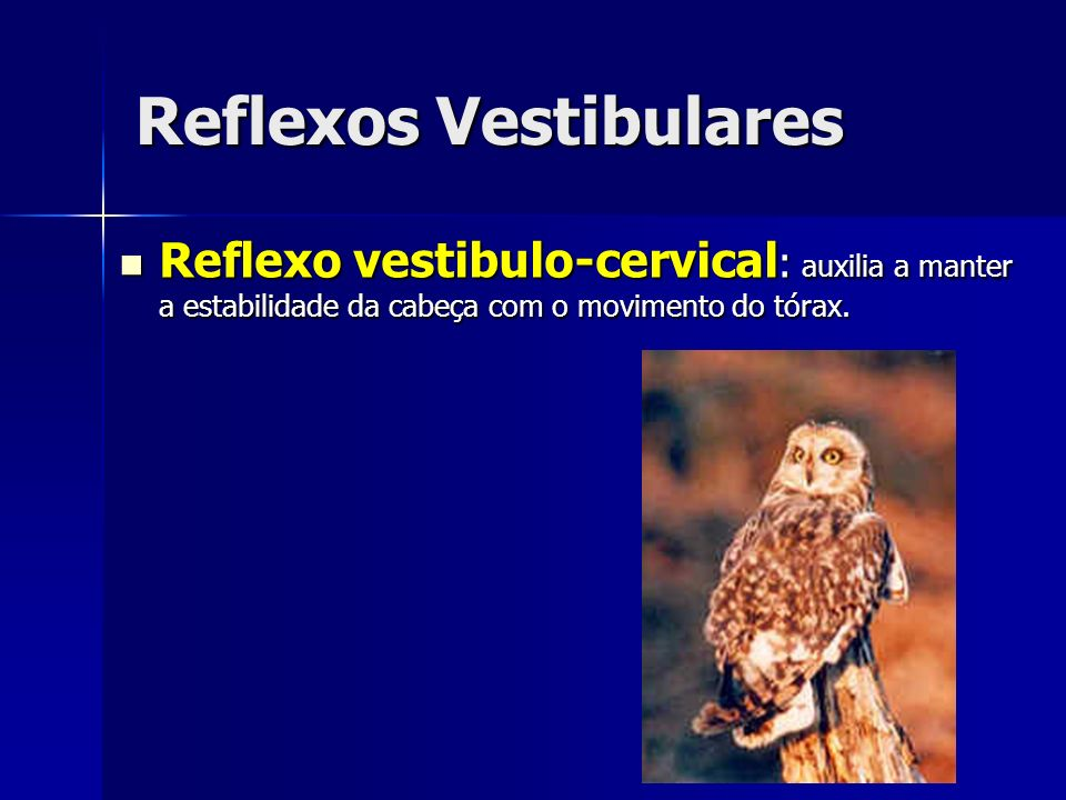 Reflexos Vestibulares