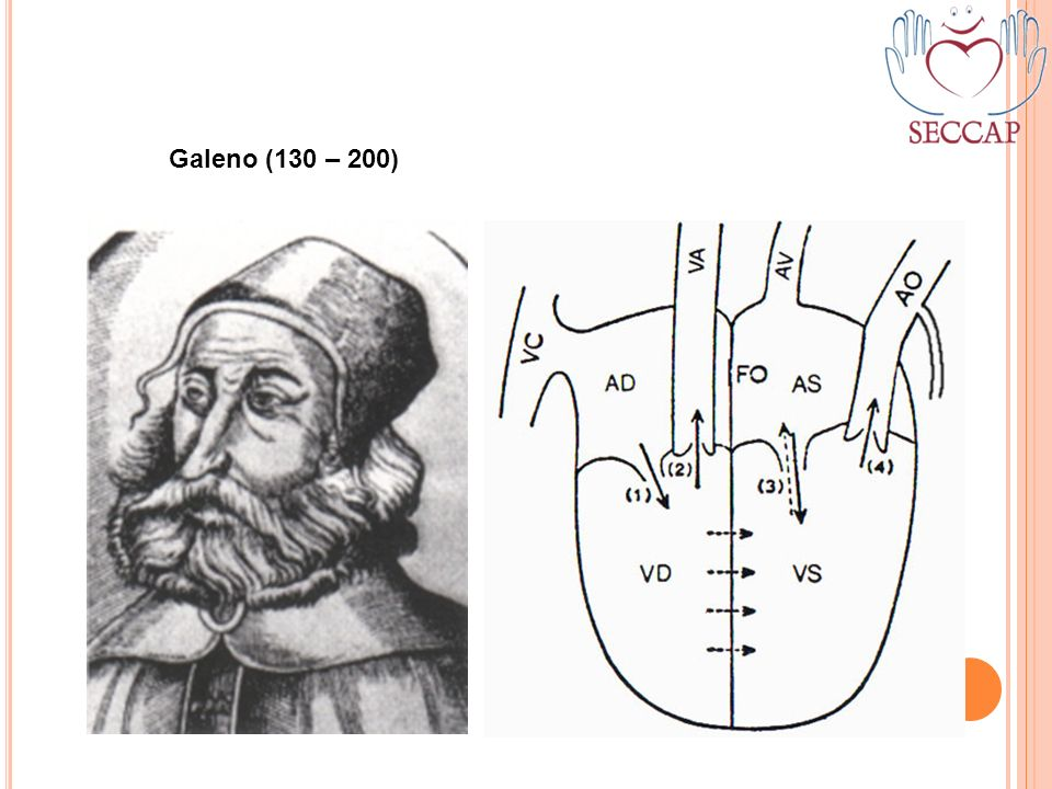 Galeno (130 – 200)