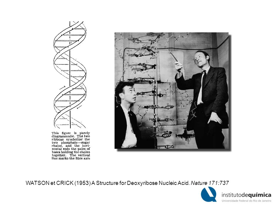 WATSON et CRICK (1953) A Structure for Deoxyribose Nucleic Acid