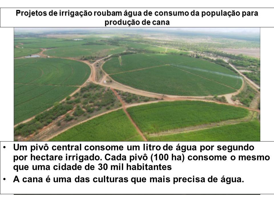 A cana é uma das culturas que mais precisa de água.