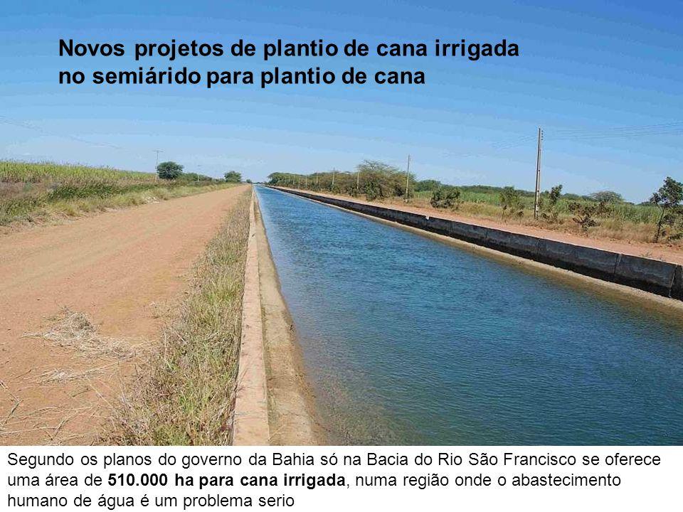 Novos projetos de plantio de cana irrigada no semiárido para plantio de cana