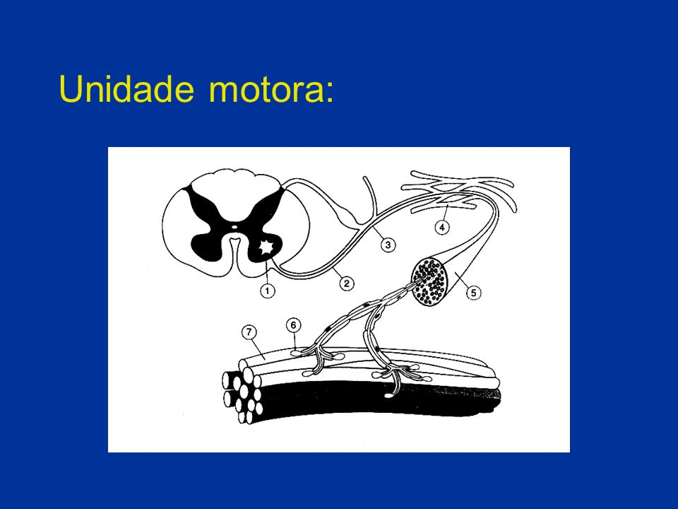 Unidade motora: