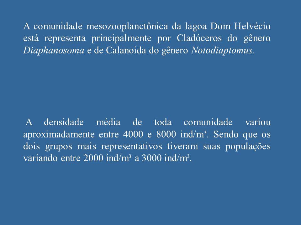 A comunidade mesozooplanctônica da lagoa Dom Helvécio está representa principalmente por Cladóceros do gênero Diaphanosoma e de Calanoida do gênero Notodiaptomus.