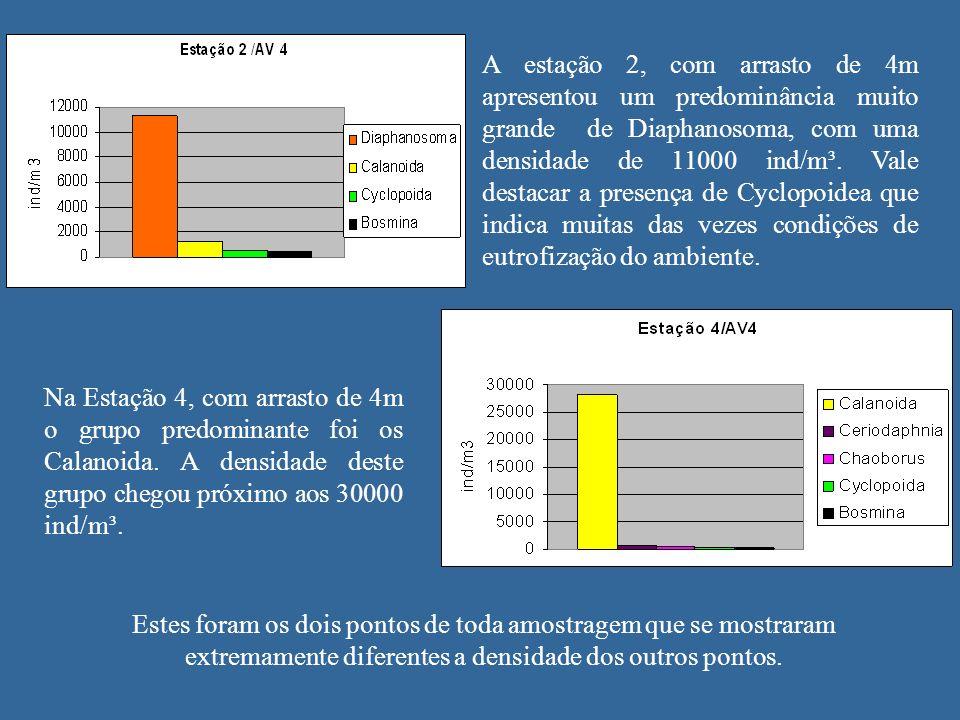 A estação 2, com arrasto de 4m apresentou um predominância muito grande de Diaphanosoma, com uma densidade de 11000 ind/m³. Vale destacar a presença de Cyclopoidea que indica muitas das vezes condições de eutrofização do ambiente.