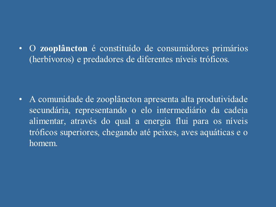 O zooplâncton é constituído de consumidores primários (herbívoros) e predadores de diferentes níveis tróficos.