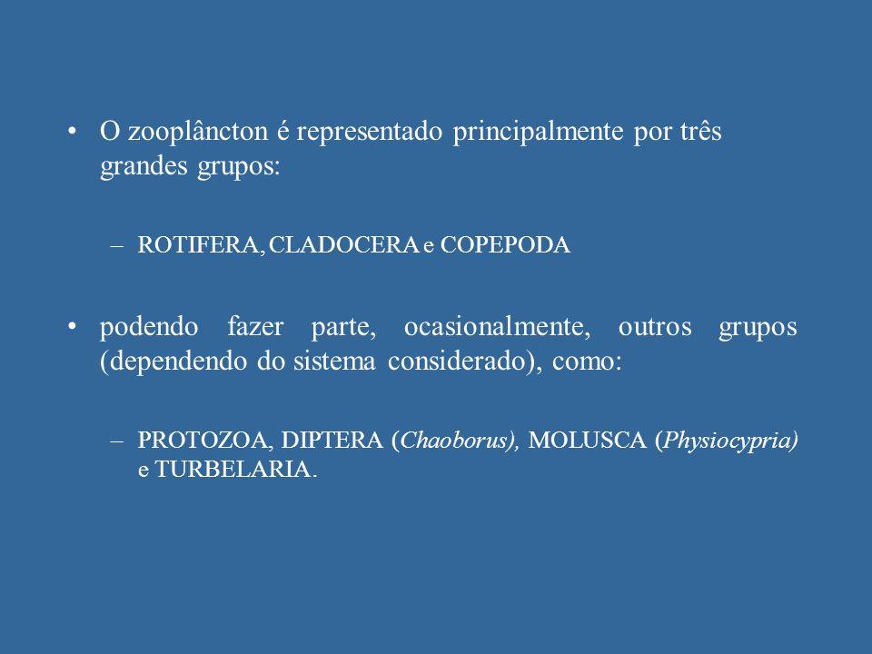 O zooplâncton é representado principalmente por três grandes grupos: