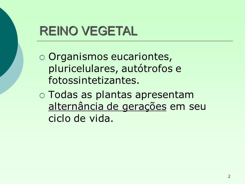REINO VEGETAL Organismos eucariontes, pluricelulares, autótrofos e fotossintetizantes.