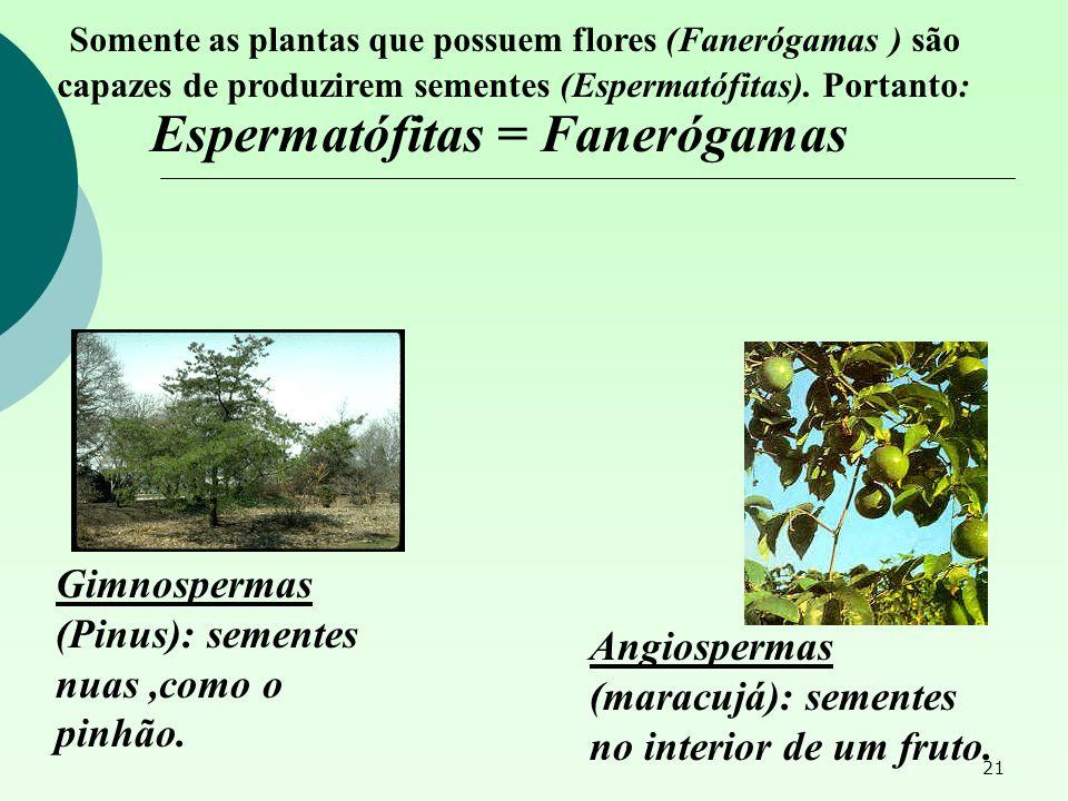 Espermatófitas = Fanerógamas