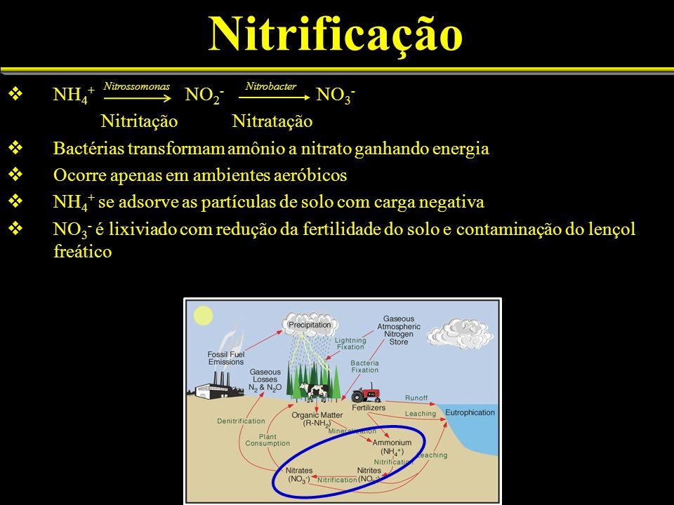 Nitrificação NH4+ NO2- NO3- Nitritação Nitratação