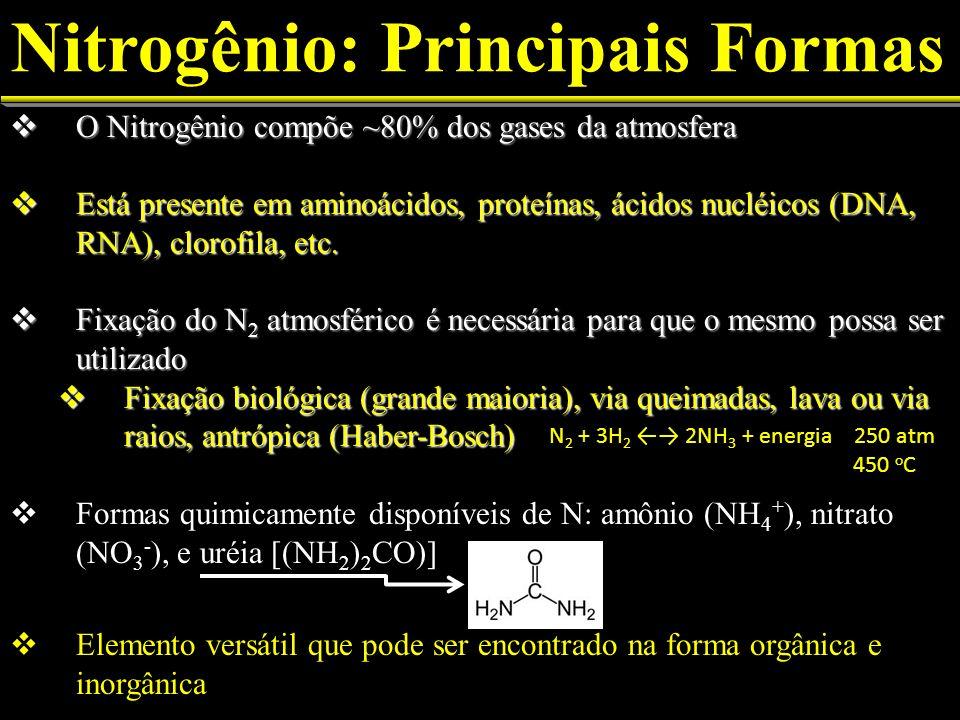 Nitrogênio: Principais Formas