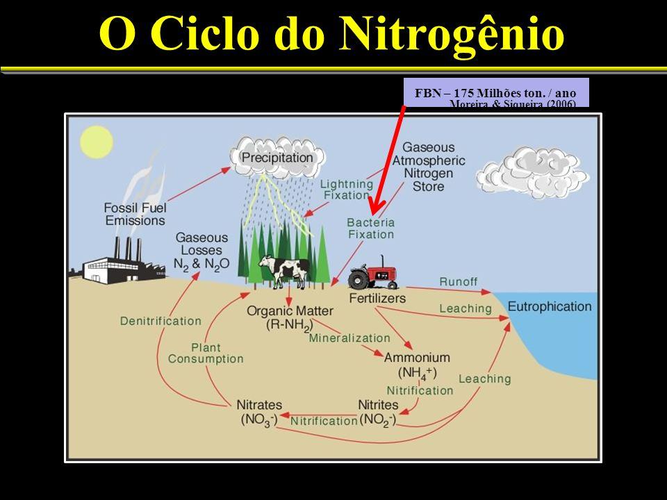 O Ciclo do Nitrogênio FBN – 175 Milhões ton. / ano