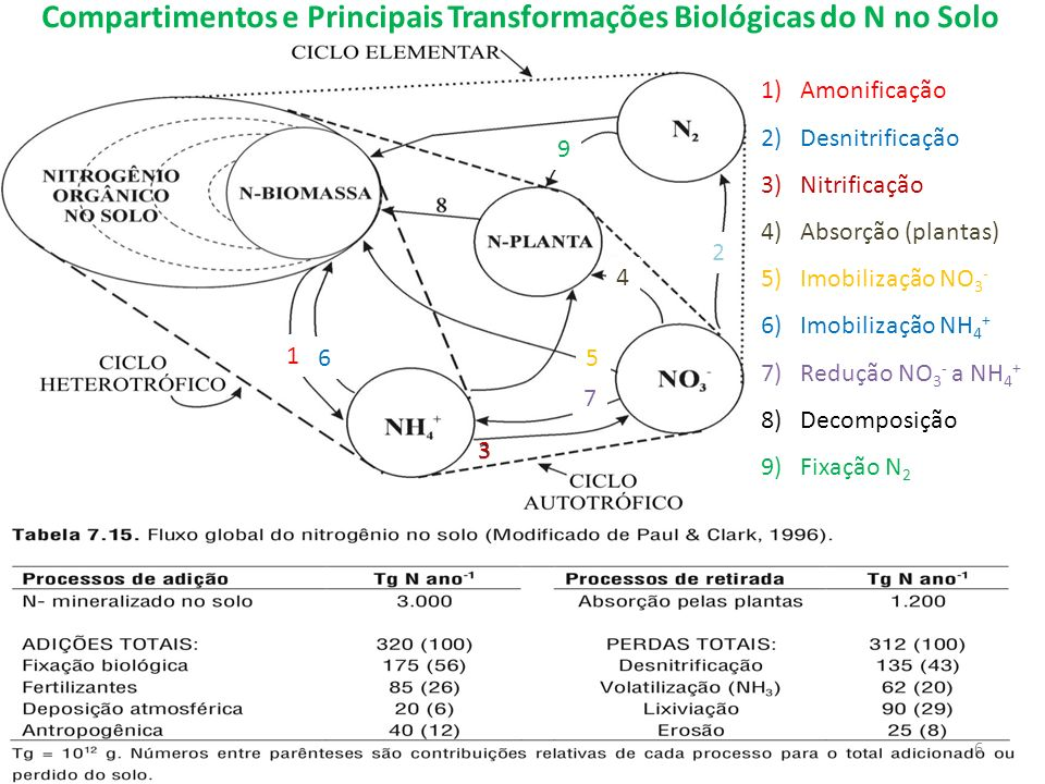 Compartimentos e Principais Transformações Biológicas do N no Solo