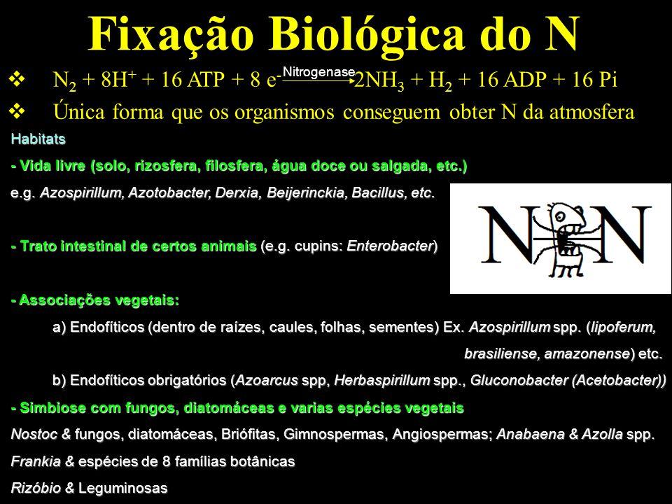 Fixação Biológica do NN2 + 8H+ + 16 ATP + 8 e- 2NH3 + H2 + 16 ADP + 16 Pi. Única forma que os organismos conseguem obter N da atmosfera.