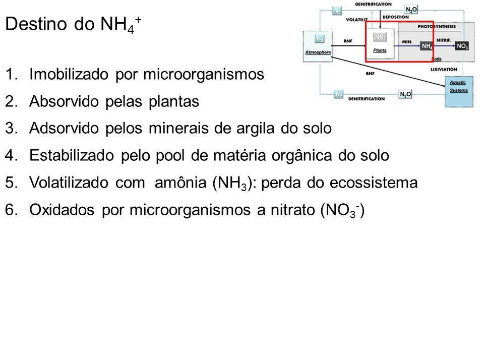 Destino do NH4+ Imobilizado por microorganismos
