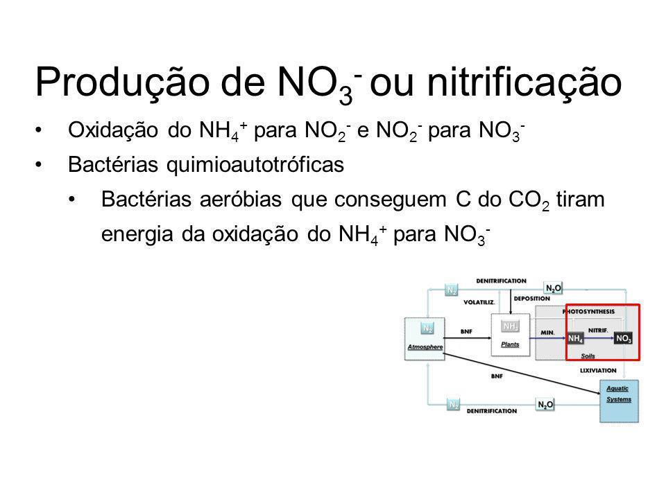 Produção de NO3- ou nitrificação