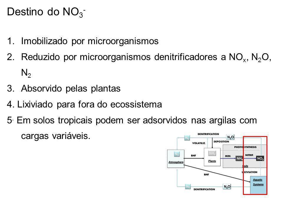 Destino do NO3- Imobilizado por microorganismos