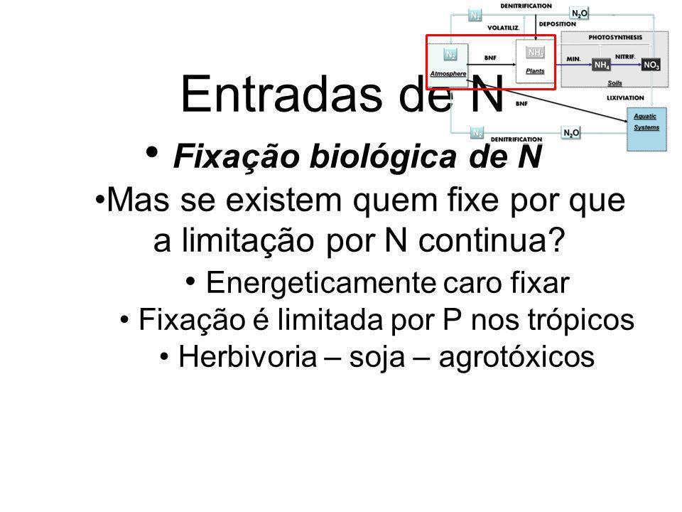 Entradas de N Fixação biológica de N Mas se existem quem fixe por que