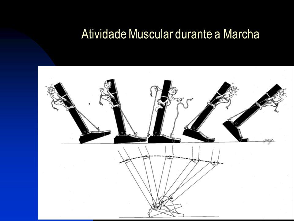 Atividade Muscular durante a Marcha