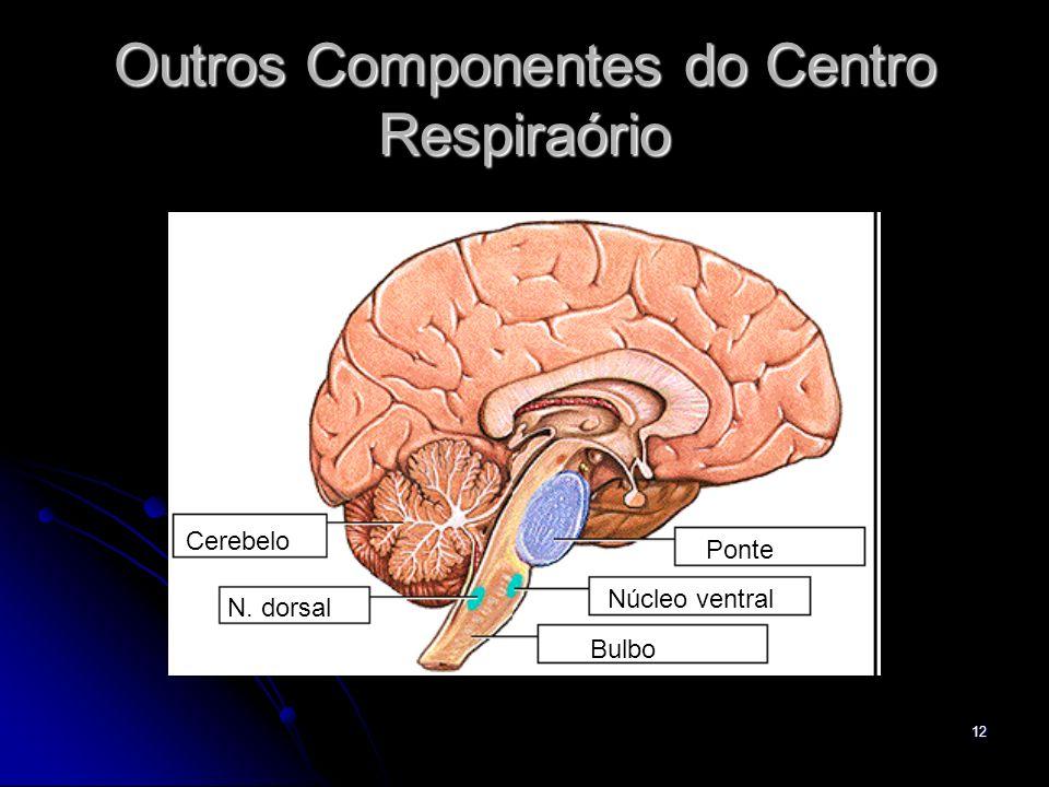 Outros Componentes do Centro Respiraório