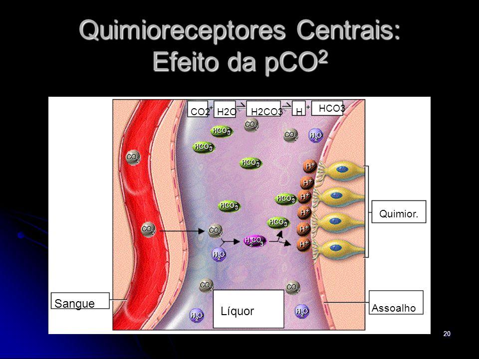 Quimioreceptores Centrais: Efeito da pCO2