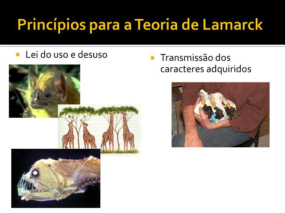 Princípios para a Teoria de Lamarck