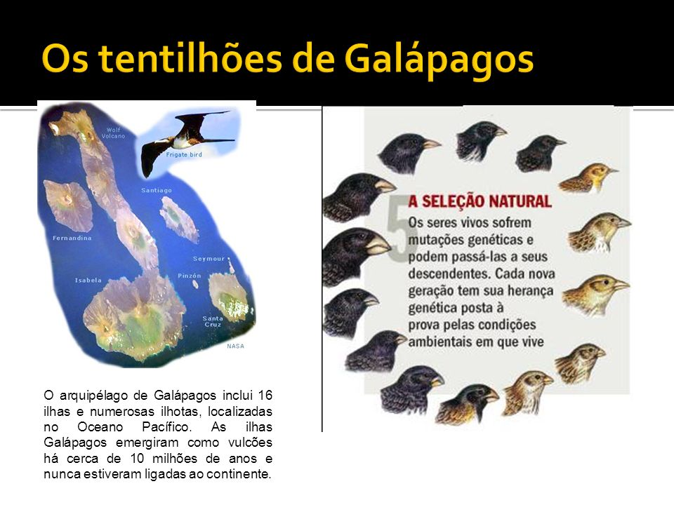 Os tentilhões de Galápagos