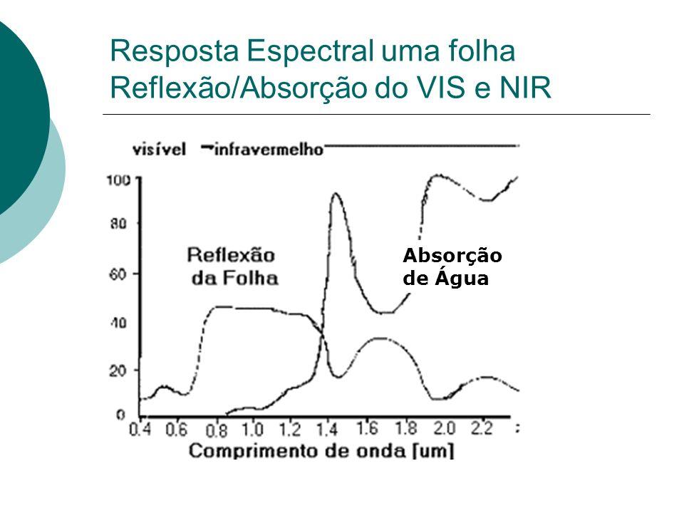Resposta Espectral uma folha Reflexão/Absorção do VIS e NIR