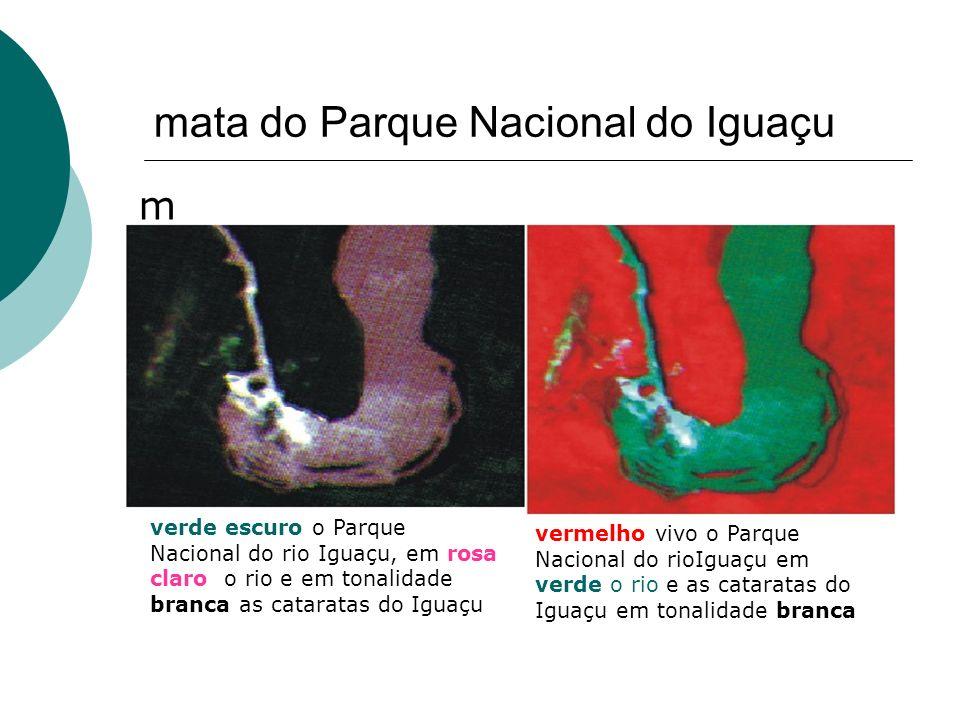 mata do Parque Nacional do Iguaçu