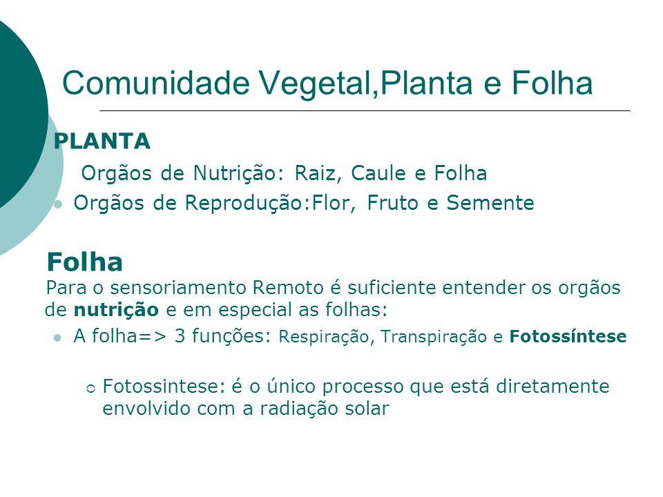 Comunidade Vegetal,Planta e Folha