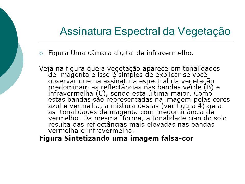 Assinatura Espectral da Vegetação