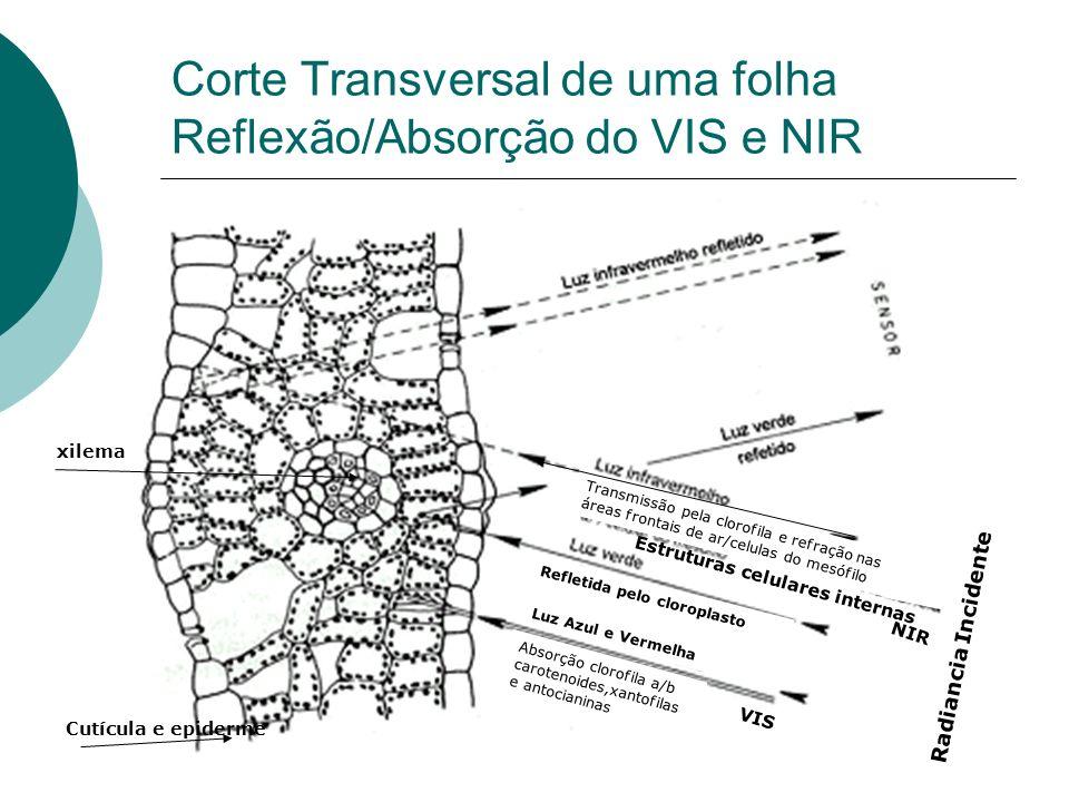Corte Transversal de uma folha Reflexão/Absorção do VIS e NIR