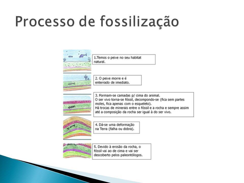 Processo de fossilização