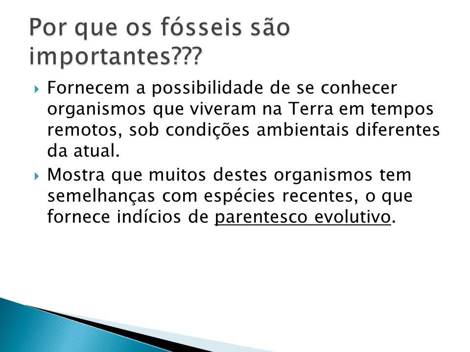 Por que os fósseis são importantes