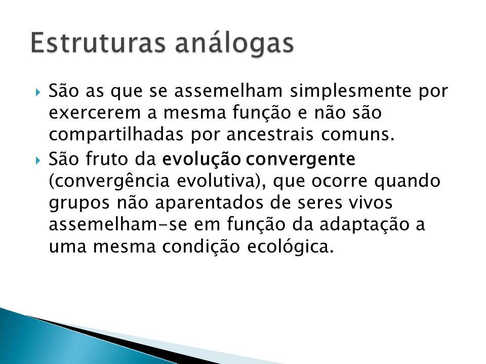 Estruturas análogas São as que se assemelham simplesmente por exercerem a mesma função e não são compartilhadas por ancestrais comuns.