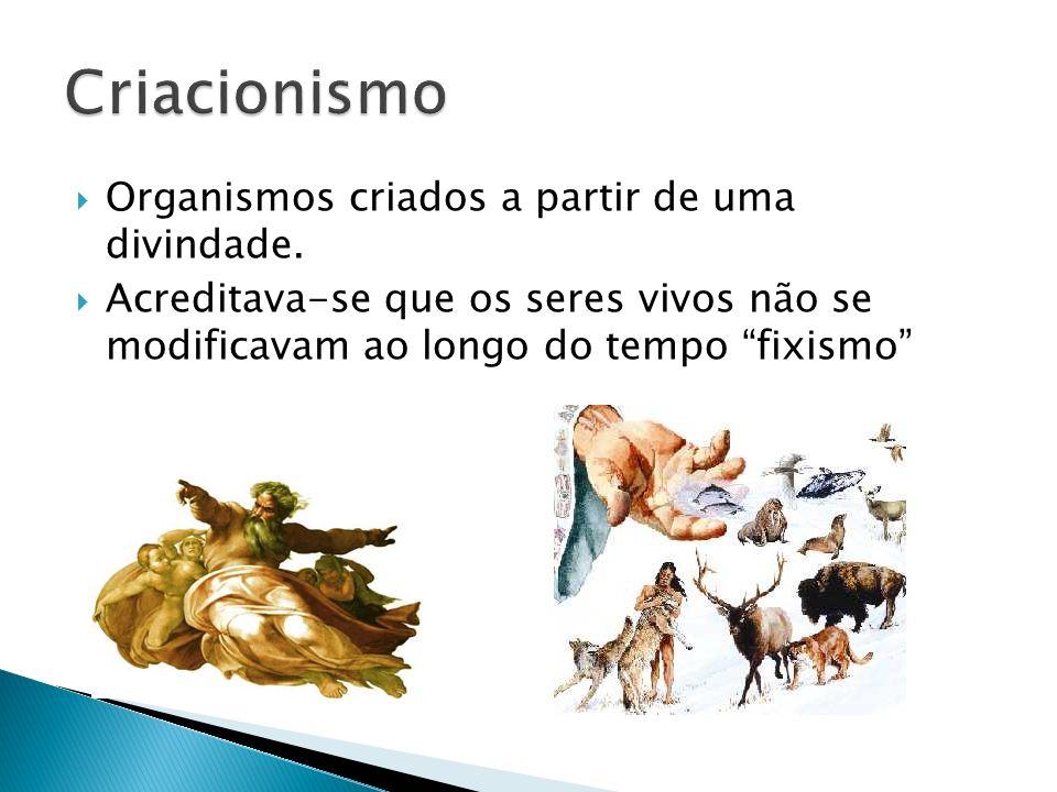 Criacionismo Organismos criados a partir de uma divindade.