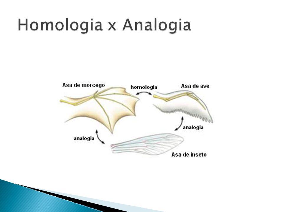 Homologia x Analogia