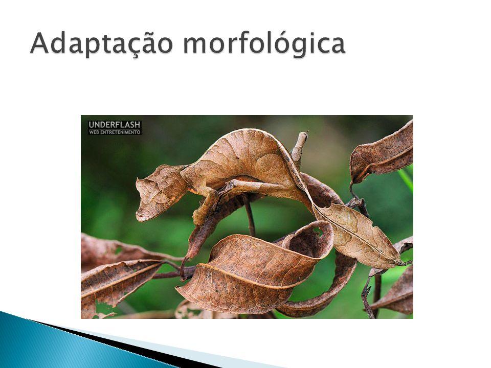 Adaptação morfológica